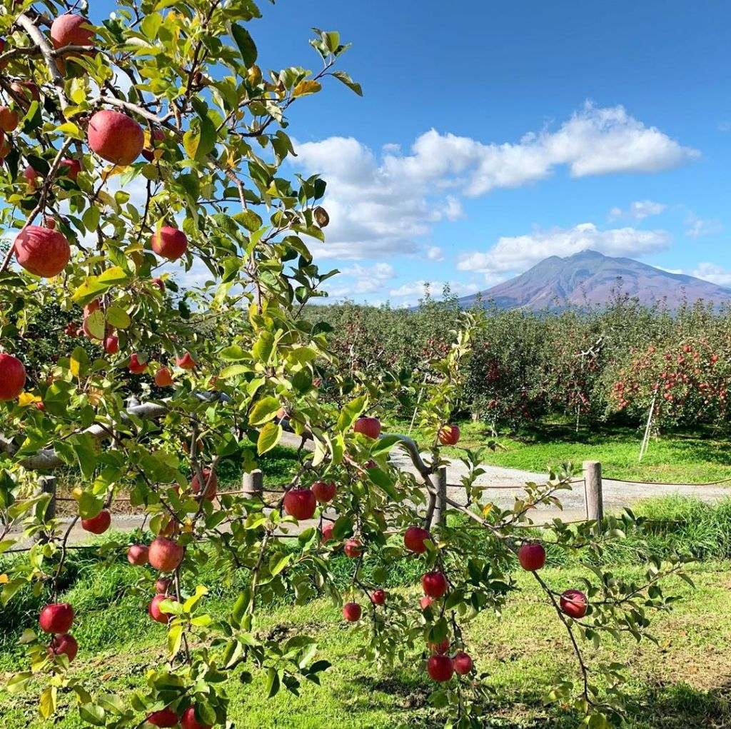日本青森蘋果園